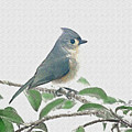 Titmouse by Larry Bishop