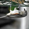 Titmouse Trickery by DigiArt Diaries by Vicky B Fuller