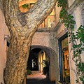 Tlaquepaque Village Tree   by Leo Gordon