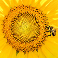 To Bee Or Not To Bee by Cathy Donohoue