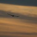To Soar - Free by Douglas Barnett