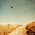 To The Beach by Wim Lanclus