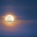 To The Moon by Bill Wakeley