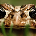 Toad In The Grass by  Onyonet  Photo Studios