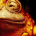 Toad by LKB Art and Photography