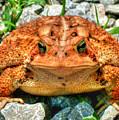 Toad by Sam Davis Johnson