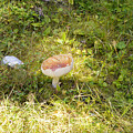 Toadstool Grows On A Forest Floor. by Ilan Rosen