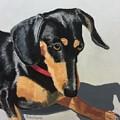 Toby Sits Still by Nancy Beauchamp