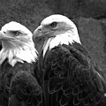 Together In Montana Black And White by Adam Jewell