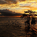 Toledo Bend Sunset by Judy Vincent