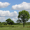 Tolworth Court Nature Reserve In Surrey by Julia Gavin