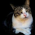 Tom Cat by Pamela Walton