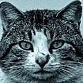 Tom Cat by Tony Grider