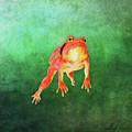 Tomato Frog by Gary D Baker