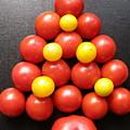 Tomatoe Tree by Jeanette Oberholtzer