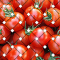 Tomatoes by Marvin Blaine