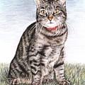 Tomcat Max by Nicole Zeug