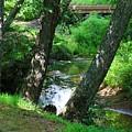 Toms Creek In Summer 3 by Kathryn Meyer