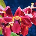 Tom's Orchid by Mishel Vanderten