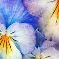 Tones Of Blue by Darren Fisher