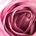 Toni's Rose  by Karen Mesaros