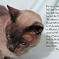 Tonkinese Cat Romans 3 V 21-24 by Linda Phelps