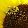 Too Much Pollen by Ben Upham III