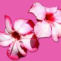 Too Pink by Bob Slitzan