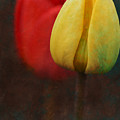Too Tulips by Peter Olsen