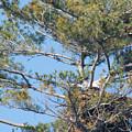 Top Of The Pine by Linda Kerkau