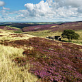 Top Withins On Haworth Moor by Mark Sunderland