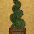 Topiary 2 by Carol Peck