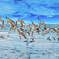 Topsail Skimmers by Betsy Knapp
