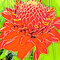 Torch Ginger Aloha by Joalene Young