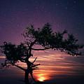 Torrey Pines Twinkle Twinkle by Stacie Rabe
