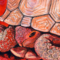 Tortoise by Bonnie Kelso