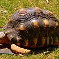 Tortoise by Lisa Wooten