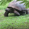 Tortoise  by Patti Valenti