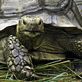 Tortoise's Stare by Betty Denise