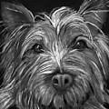 Tosha The Highland Terrier by Portraits By NC