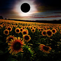 Total Eclipse Over The Sunflower Field by Debra and Dave Vanderlaan