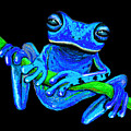 Totally Blue Frog On A Vine by Nick Gustafson