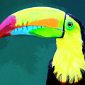 Toucan by Dominic Piperata