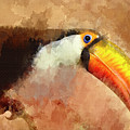 Toucan by David Millenheft