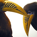 Toucan Play At That Game by Jez C Self