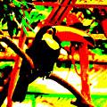 Toucan Tourcanna by Don Barrett