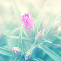 Touch Of Pink by Jackie Farnsworth