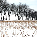 Touch Of Winter  by Chuck Kuhn