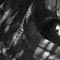 Tough Hide... by Gerry McAteer