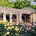Tournament Of Roses by David Lloyd Glover